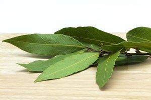 laurel branch