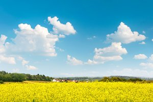 Rapeseed field over cloudy blue sky