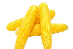 Yellow young corns isolated on white