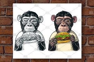 Monkey eat hamburger Engraving