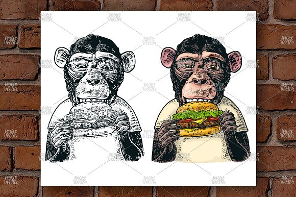 Monkey eat hamburger Engraving