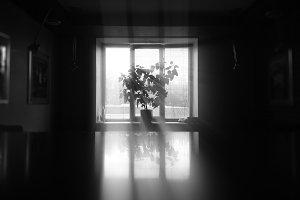 Black and white plant near windows b