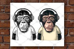 Monkey in headphones Engraving