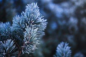 Christmas natural backdrop