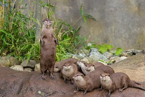 Lovely playful otters have fun outdo