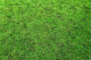 Soccer green grass field texture bac