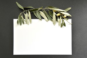 Template with green olive branch