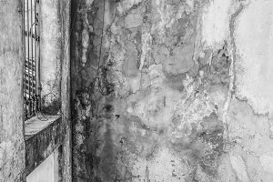 Plant in a Vintage Wall