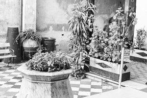 Vintage Plants Building