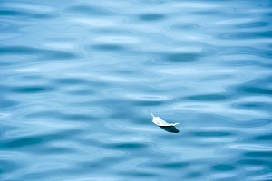 Feather Floating in Blue