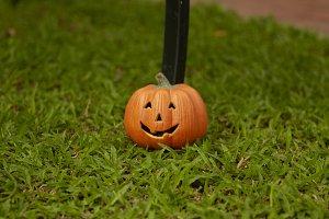 single pumpkin on green grass
