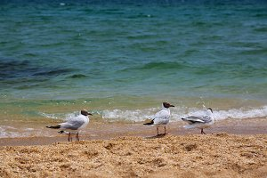 Seascape with seagulls flying at
