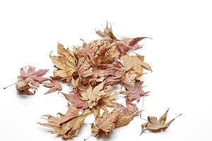 autumn Leaf color change