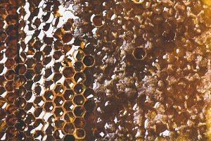 Natural bee honeycomb texture
