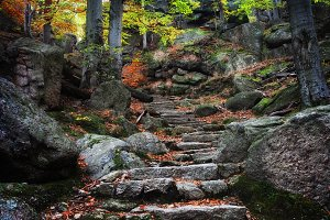 Ancient Stairs in Mountain Forest
