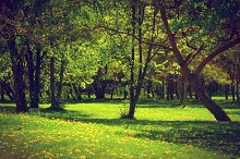 Green spring park landscape