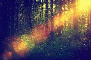 Sun shining through deep forest