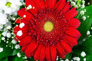 texture of red gerbera