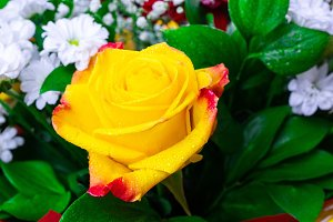 rose and chrysanthemum