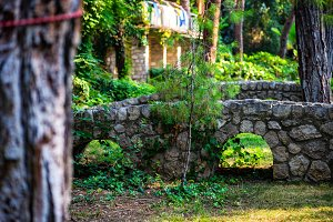 Ivy plant and architecture