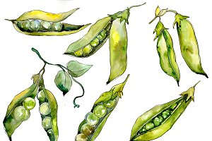 Pea seed vegetables PNG watercolor