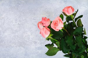 Bouquet of pink roses in the hands o