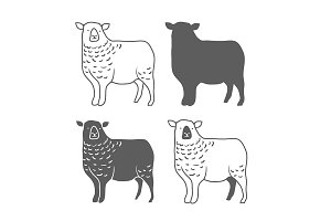 Domestic Animal Sheep