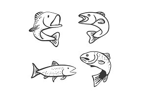 Set of Fish Isolated on White