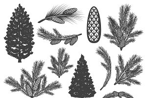 Vintage Coniferous Tree Elements Set