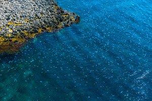 Congestion Millions of jellyfish flo