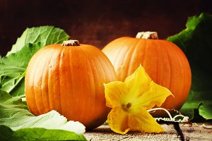 Autumn harvest of pumpkins with flow