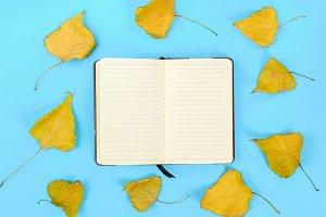Autumn composition: Bright maple lea
