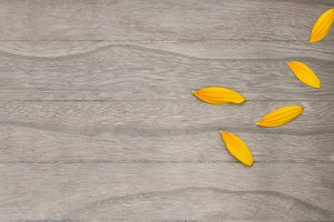 Sunflower petal on wooden background