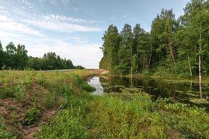 swamp at the road