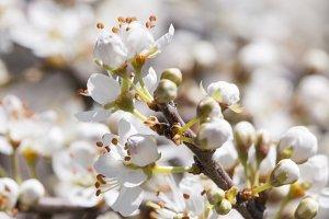 white flower color