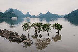 Small trees in water