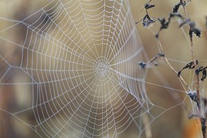 Spider net with dew in the morning