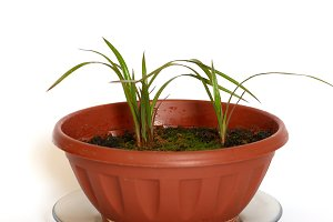 Green young plants in the pot on whi