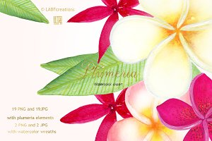 Plumeria Tropical flowers clipart