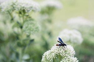 pollinator 01