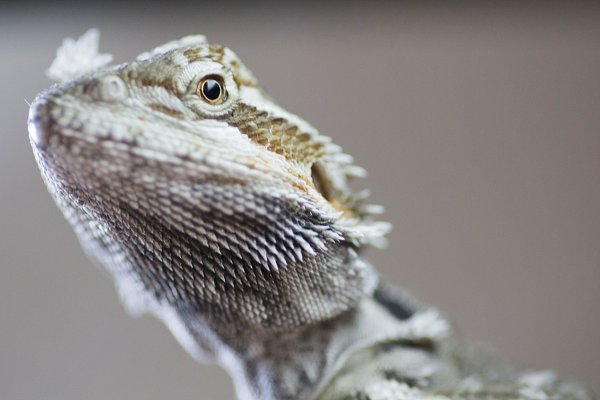 Animal Stock Photos - dragon 01