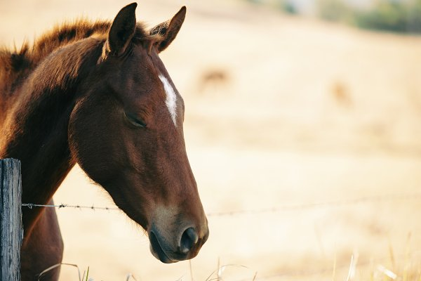 Animal Stock Photos: Rob D - Photographer - Australian horse in a country