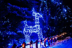 Shining deer of blue ligts. Christma