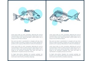 Bass and Bream Fish Posters Vector