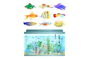Huge Aquarium and Various Fishes Set