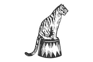 Circus tiger animal engraving vector