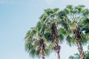 Palm trees at the sky