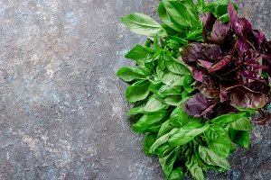branch Green and red basil on dark g