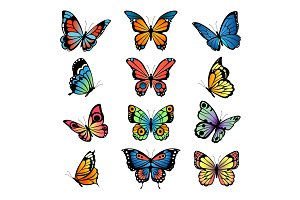 Various cartoon butterflies. Set