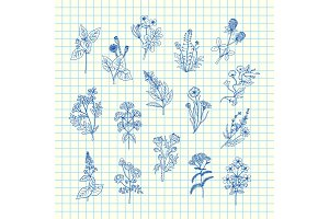 Vector hand drawn medical herbs set
